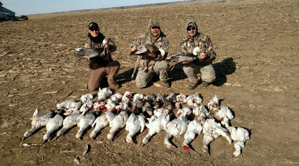 2fbd5b717df22 ... outfittersspring snow goose · Guided Snow Goose Hunts - Mound City,  Missouri - 855-473-2875